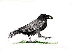 susan_levine_crow_blog