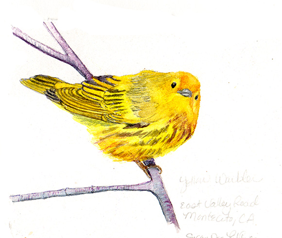 susan_levine_yellowwarbler