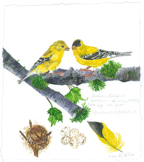 Susan Levine Art American Goldfinch Couple