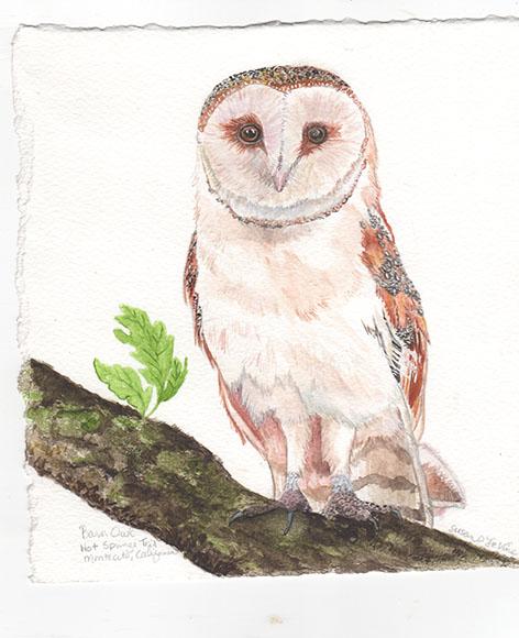barn owl copy.tiff web