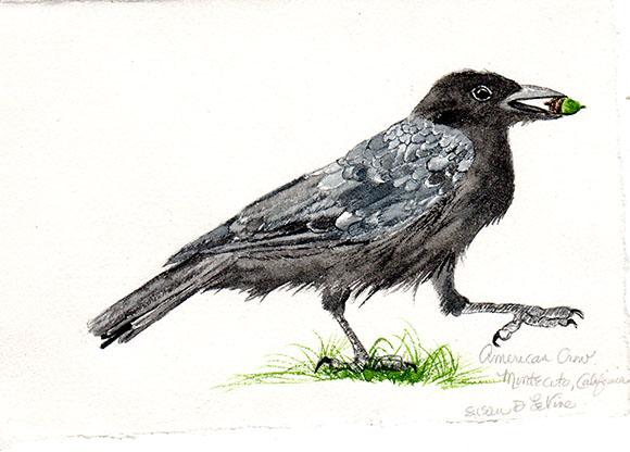 happy crow101 web