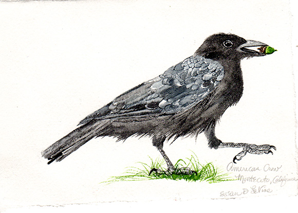 happy-crow101-web
