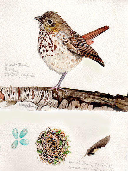 hermitthrush119 web
