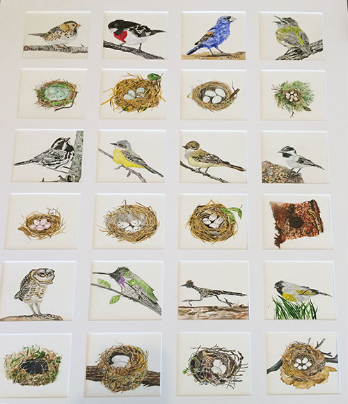 bird quilt of rare birds web