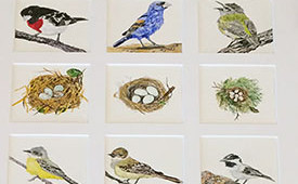 Bird Quilt of Rare Visitors of the California Coast