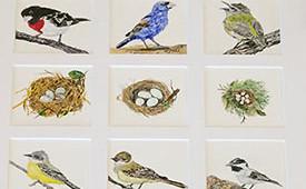 Bird Quilt of Rare Visitors of the California Coast