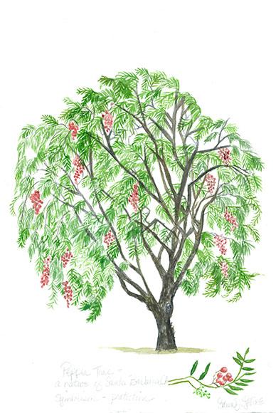 lvine_peppertree_web