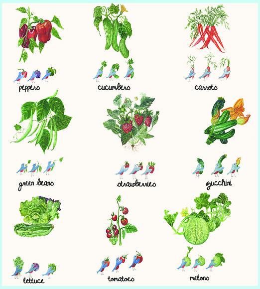 levine_fruit_veggies
