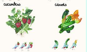 veggies and strawberries