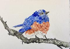 susan_levine_bluebird_blog