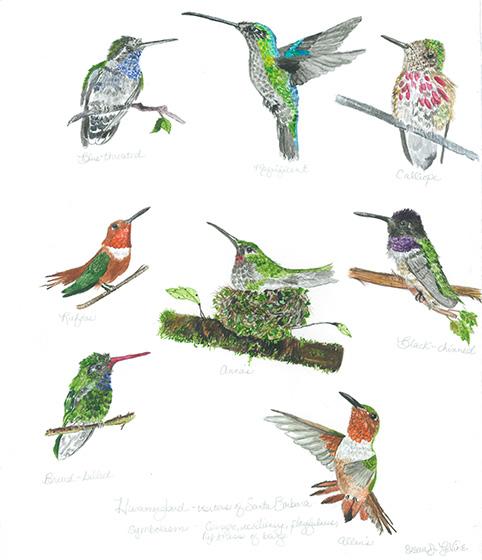 levine_hummingbirds_web