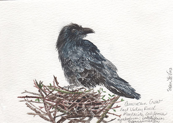 s_levine_crow on nest_2015_web