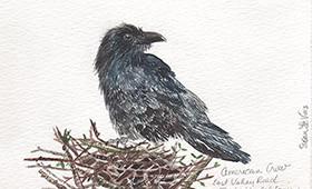 Crow on a nest