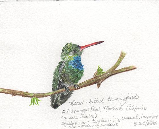 broadbilledhummingbird_levine_web