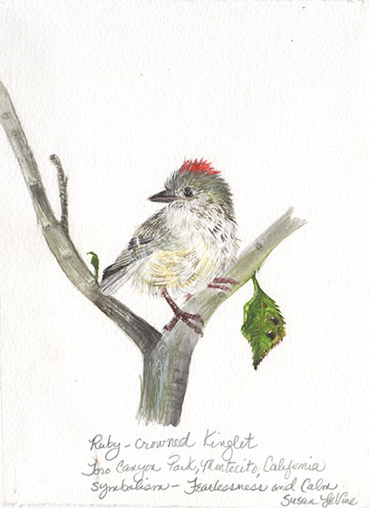 levine_ruby crowned kinglet_web