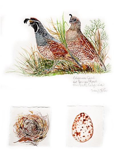 quail_web