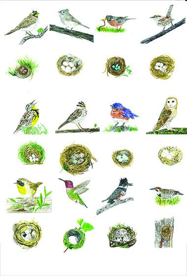santa barbara bird quilt2-web