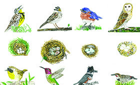 Bird Quilt of California