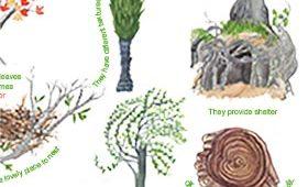 Why I love Trees