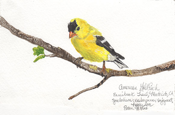 Susan Levine Art American Goldfinch