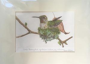 thumbnail_LeVine_hummingbird_print