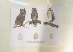 thumbnail_LeVine_owltrio_matted