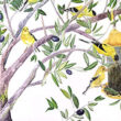 Goldfinches in an Olive Tree