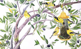 Goldfinches in the Olive Tree